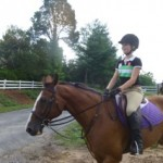 bay purple saddle pad